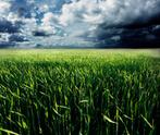 Storm,Field,Wheat,Farm,Clou...