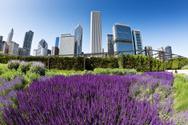 Chicago,City,Formal Garden,...