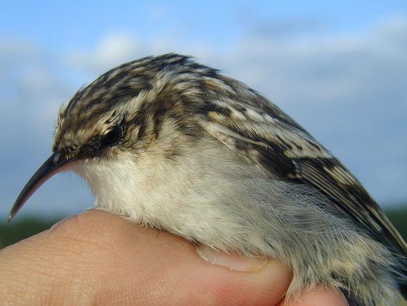 Lovely Bird 2