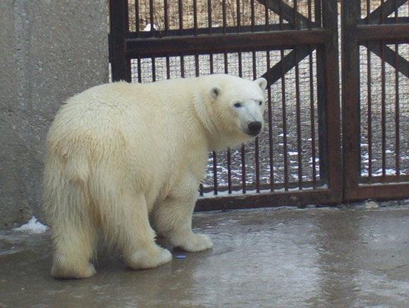 Toronto Zoo9
