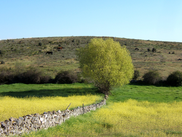 campos Castilla