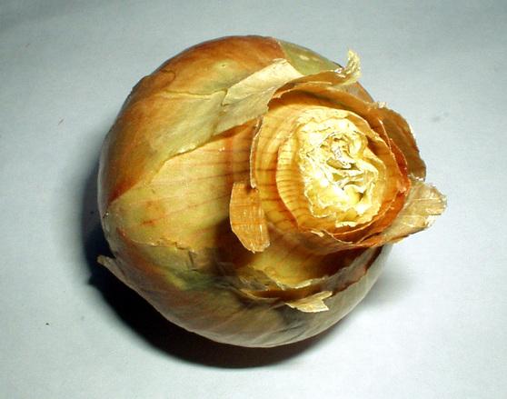 Onion dream
