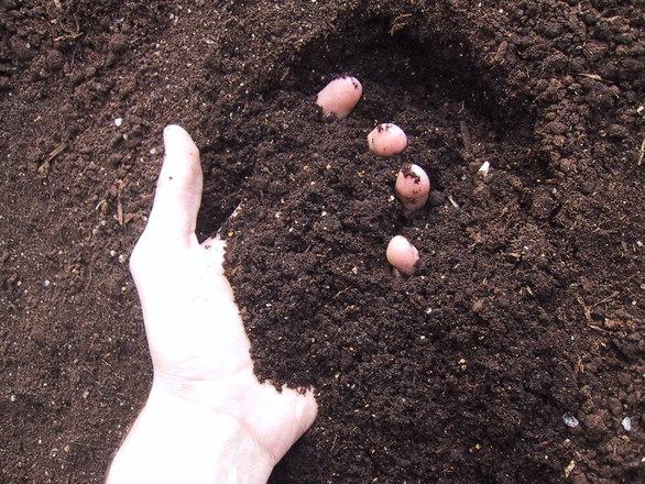 Gleby świeże