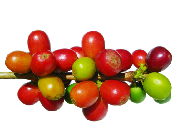 Coffee beans colorful
