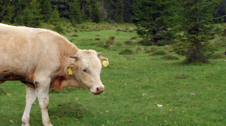 ВКонтакте андроид девушк на половину корова ожидаю сделке