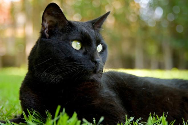 Cat S Paw Vineyard