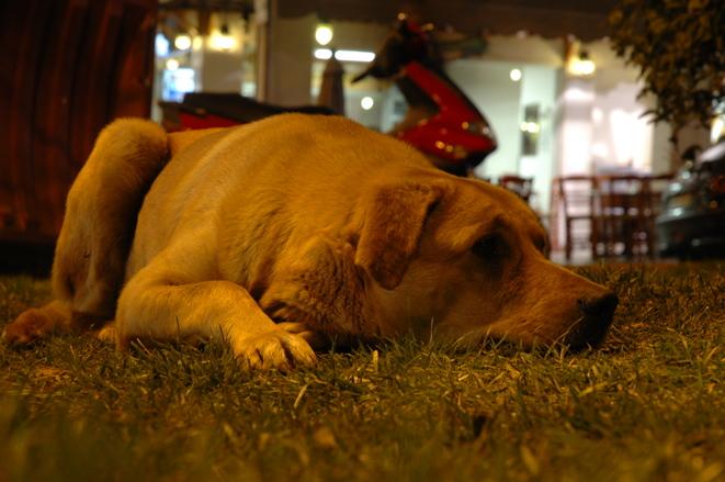 最忧伤的狗狗-伤心的狗