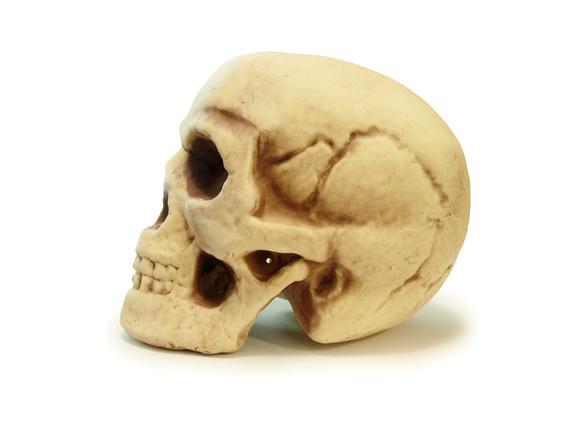 Halloween Skull 4