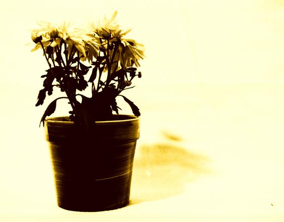 Flower Pots in Sepia 1