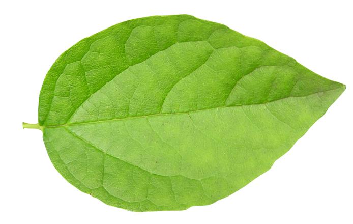 Как зеленые листья сделать красными