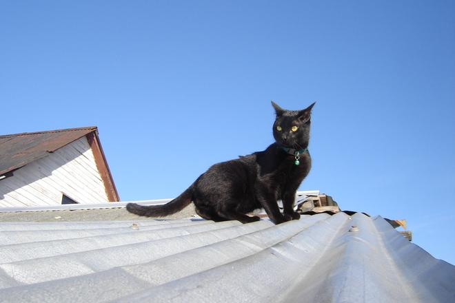 Black Cat Roof Photo 1351530 Freeimages Com