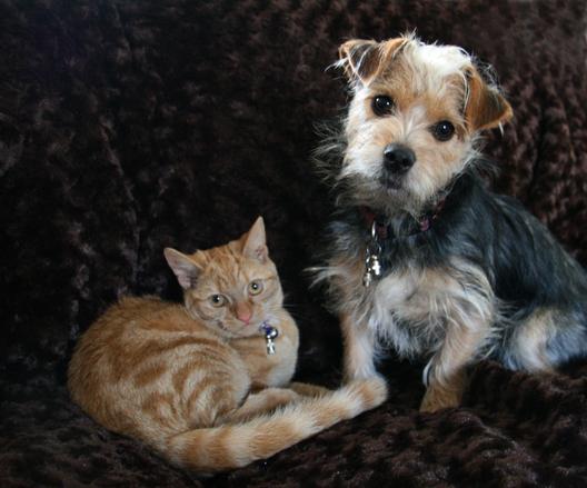 Kotek i Terrier