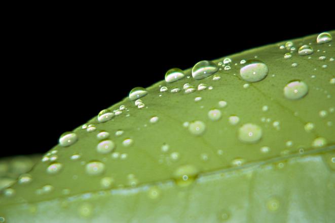 Plant Drops