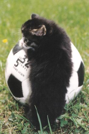 cat & football