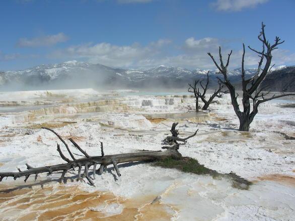 Sulpher Springs, Yellowstone Park