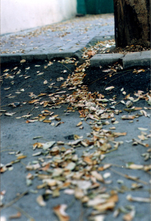 leafs Istanbul
