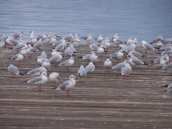Water Birds 1