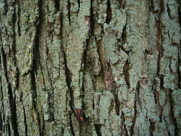 tree bark texture photos