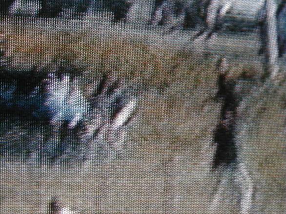 Scenes from a Gunfight