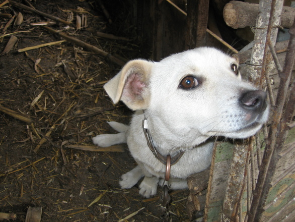 Village Doggy