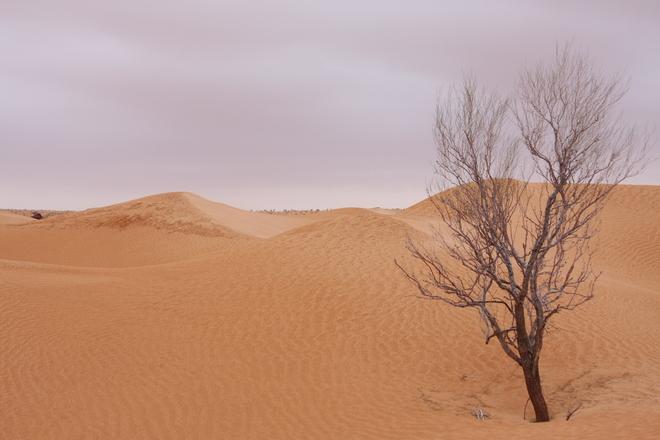 Sahara in a rainy day