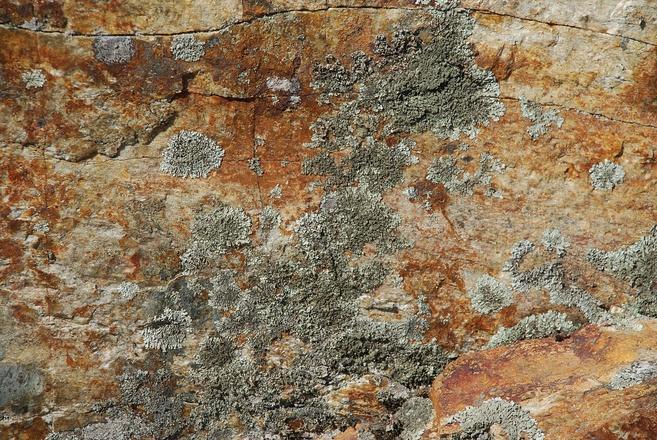 Rocks & lichens 1