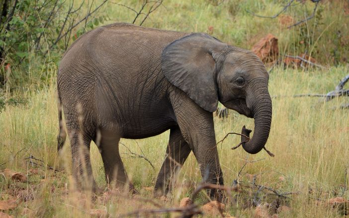 Elephants on parade 2