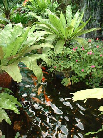 Tropical Fish Pond Free Photo 1495722