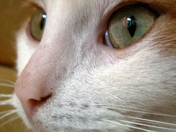 the cat 1