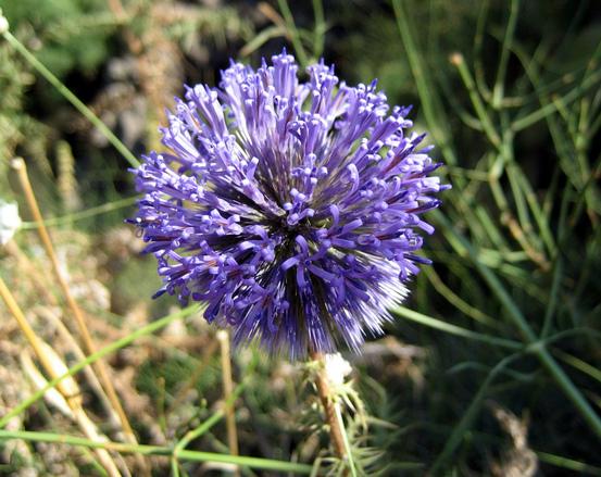 Purple spike flower photo 1369575 for Abri jardin sans entretien