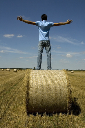 Harvest freedom 2