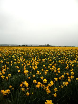 In the Fields 3