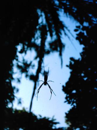 spider silhouette 4