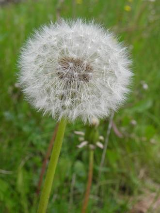 Wonderful Blowball 5