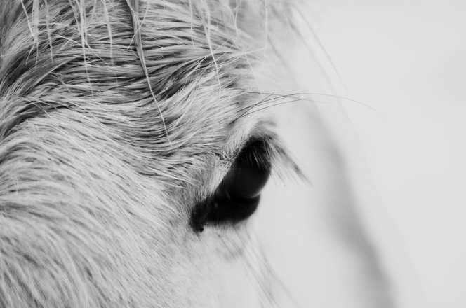 Horse Eye Detail 2