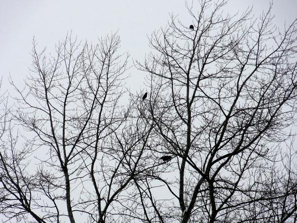 Birds on Leafless Trees