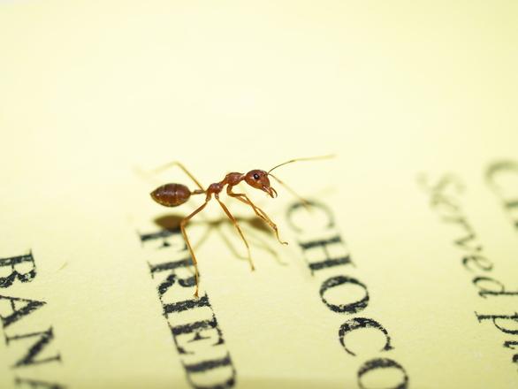 Ant on menu