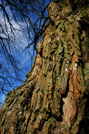 Tree cortex