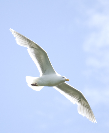 segul in the air