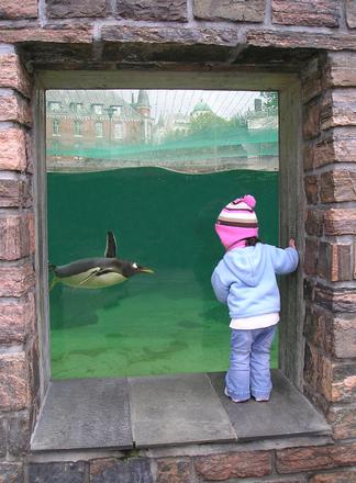 close encounter with a penguin