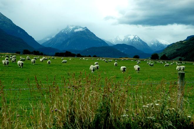 New Zealand Music Festivals South Island