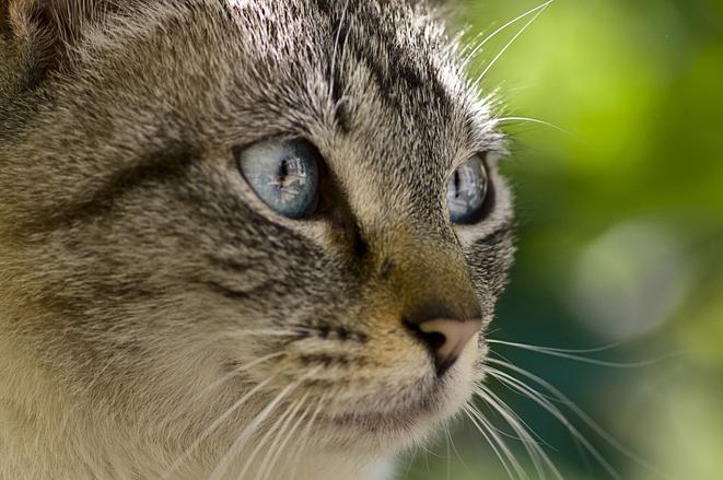 природа животные кот крупный план бесплатно