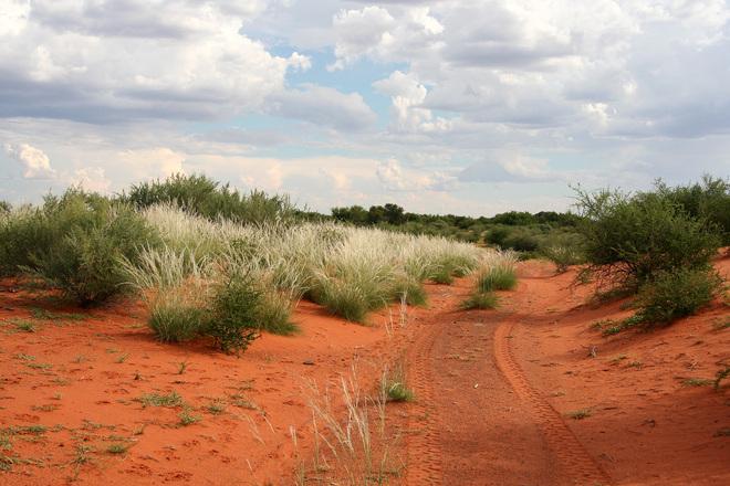 Free Kalahari Desert Gravel Road Stock Photo Freeimages Com