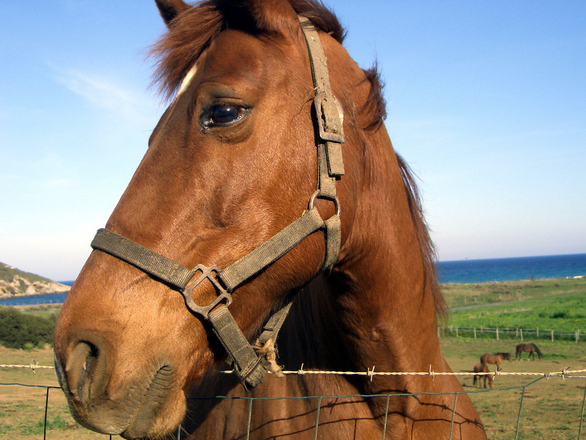 Horse, green, sea