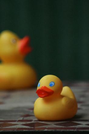 Ducks on the run 2