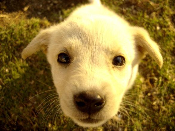 Julia Galia zoopsycholog łączenie kotów z psami