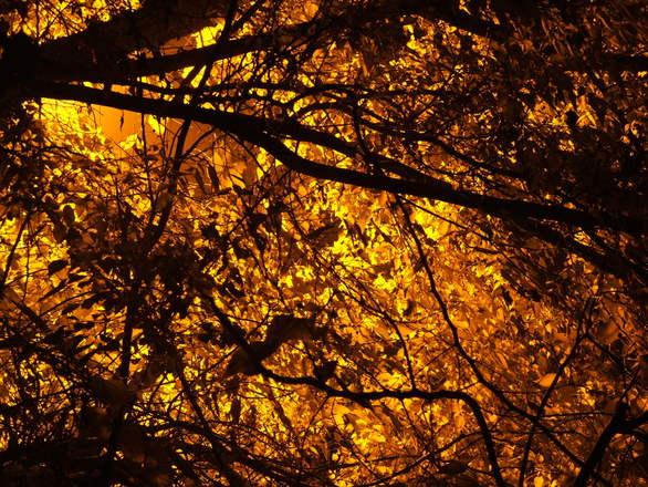 Inner Tree 2.0