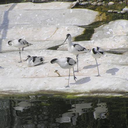 strange birds 01
