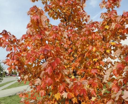 Golden Photo leaves