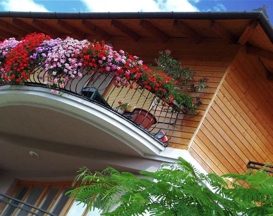 ищете цветы на балкон несолнечная сторона картины